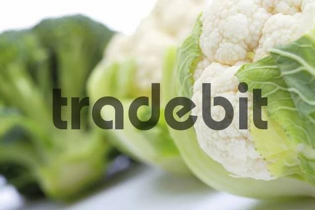 Miniature cauliflower and broccoli