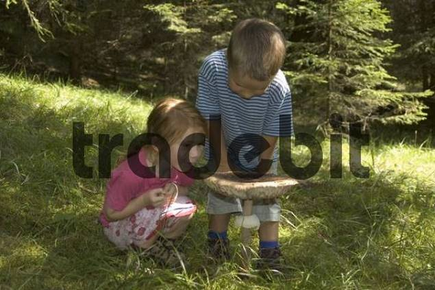 two children are studying a big mushroom in a forest Macrolepiota procera parasol