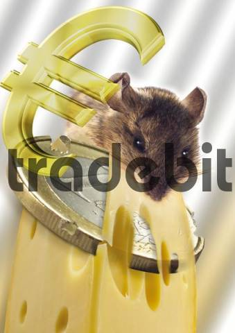Mouse nibbling on cheese with one-euro coin and euro symbol, Composing shot