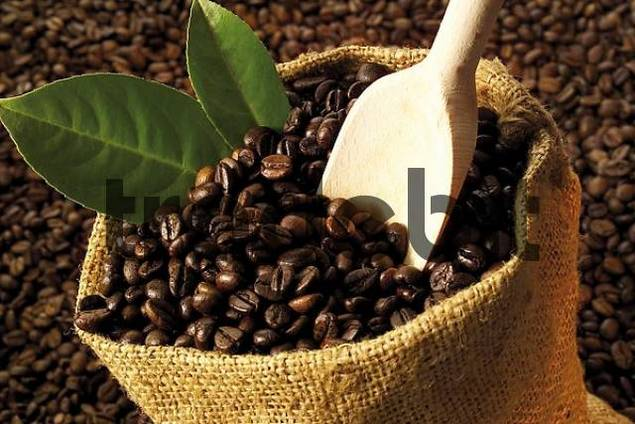 Linen sack filled with coffee beans with wooden scoop atop a bed of coffee beans