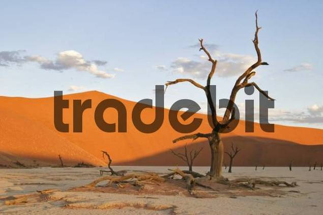 Dead Trees between dunes in the Namib desert, Deadvlei, Namibia, Africa
