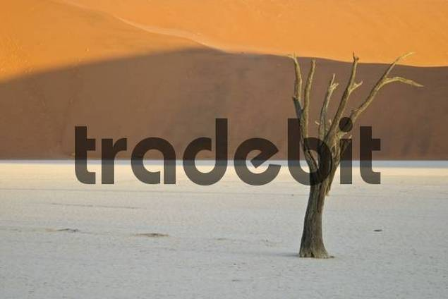 Dead Trees between dunes in the Namib desert, Deadvlei, Namibia, Africa