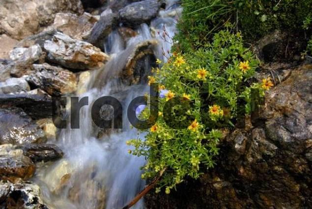 Mountain stream, Kemater Alm alpine pasture, Tirol, Austria, Europe