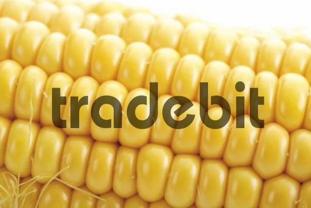 Cob of corn, close-up shot