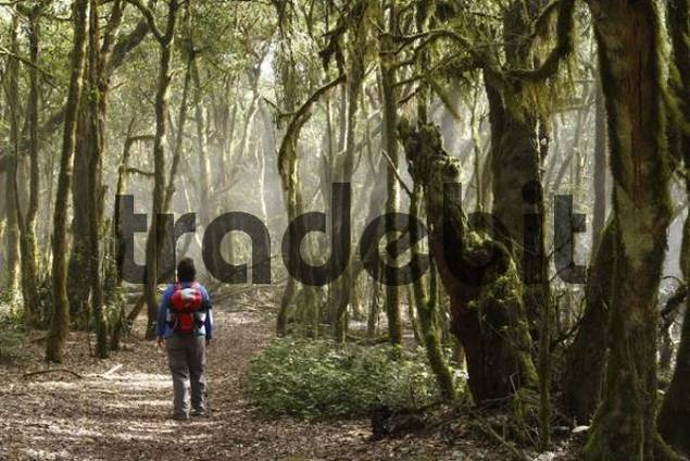 woman hiking through Garajonay National Park, laurel forest, laurisilva, La Gomera, Canary Islands, Spain