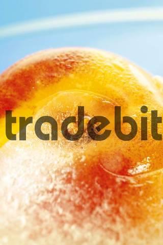 Peach Prunus persica frozen in a block of ice