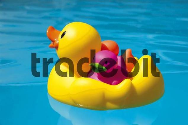 Rubber ducky with little rubber duckies on its back