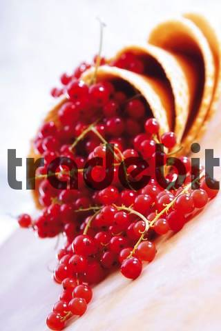 Red currants in waffle cones