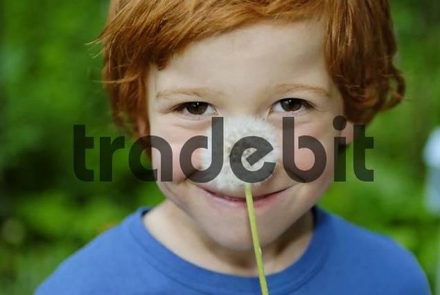 Boy holding dandelion clock Taraxacum