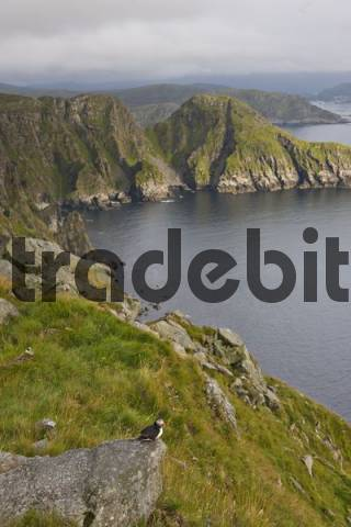 View of part of Runde Island in the evening light, Mre og Romsdal, Norway, Scandinavia, Europe