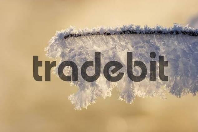 winter morning hoarfrost Germany