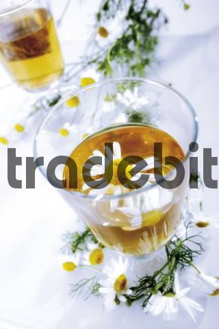 Chamomile tea with German Chamomile Camomile flowers Matricariae flos