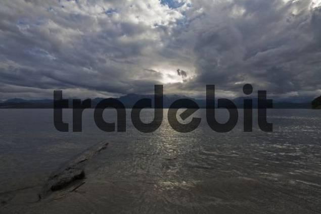 Trunk at the lake Nahuel Huapi, national park Parque Nacional Nahuel Huapi, lake region of northern Patagonia, Argentina, South America