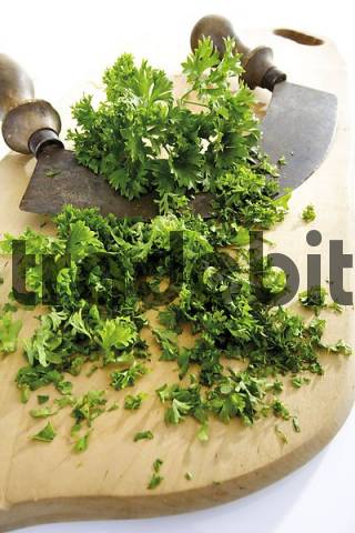 Parsley Petroselinum crispum on a cutting board with curved chopping knife