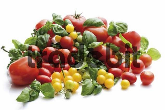 Red and yellow grape tomatoes with basil