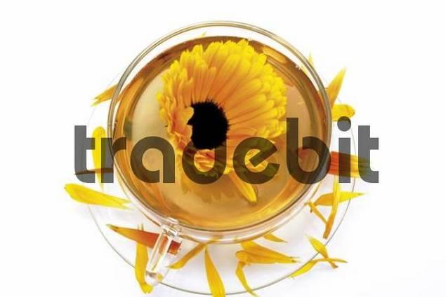 Marigold tea Calendula officinalis