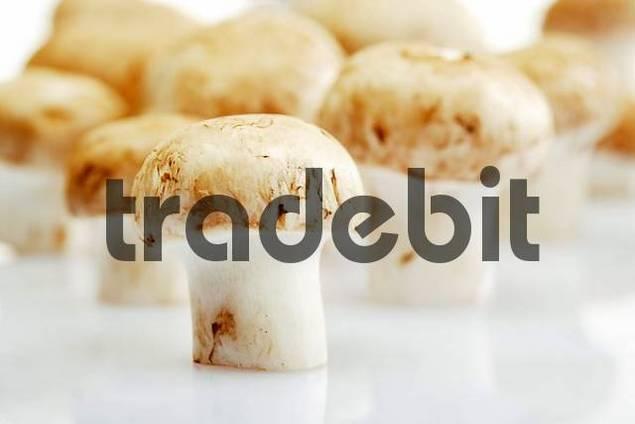 Button Mushrooms, Champignons Agaricus