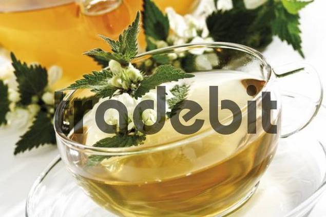 Deadnettle tea, teapot and teacup