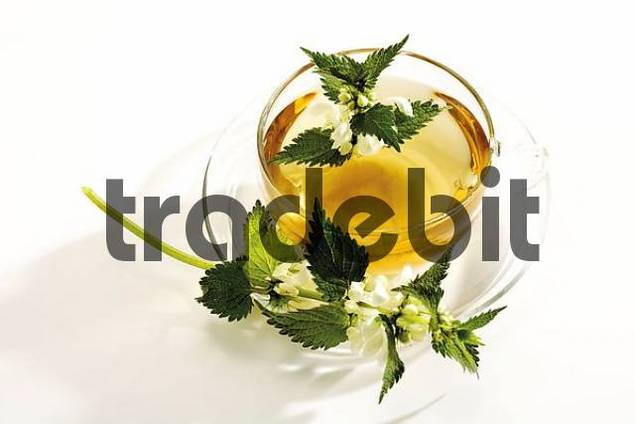 Deadnettle tea, teacup