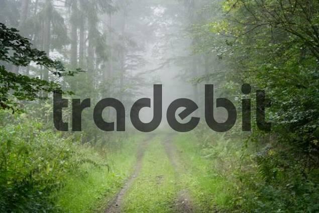 Morning mist, Taunus region, Hesse, Germany, Europe