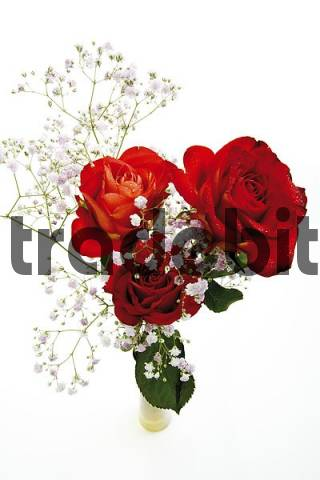 Red Roses Rosa and Babys Breath Gypsophila