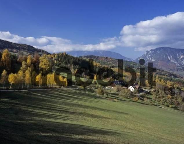 Birch trees and a farm in autumn, Rax Range in background, Lower Austria, Austria, Europe