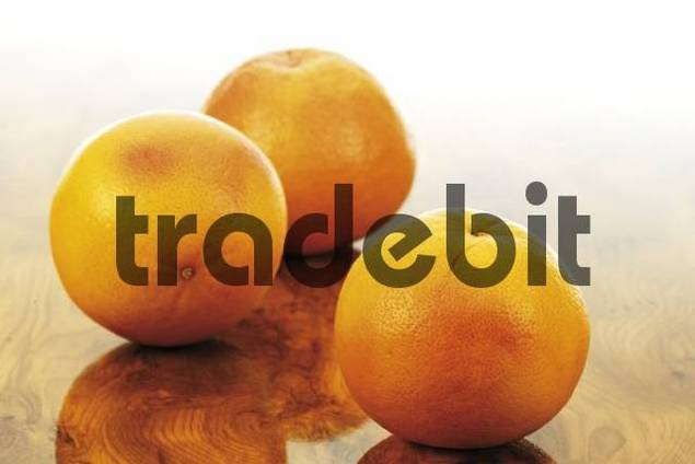 Ruby Red Grapefruit Citrus