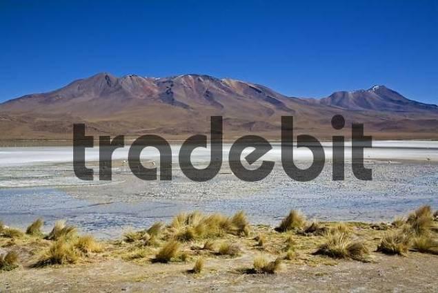 Lagoon with a lot of flamingos, Altiplano, Bolivia, South America