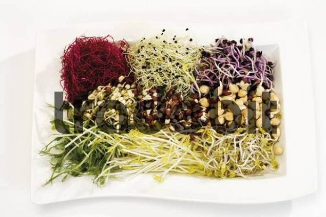 Mixed sprouts: bean, green peez, garlic, beetroot, mung bean and radish sprouts