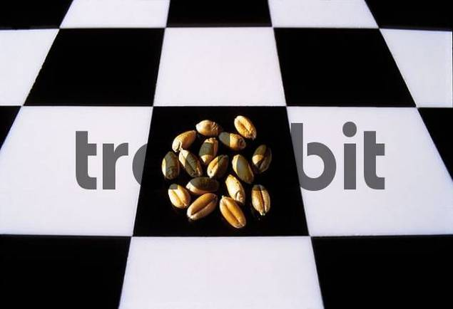 Chess board checkerboard, cequerboard with sixteen grains of wheat. Story legend of the Indian king Shihram and the wise man Sissa bin Dahir