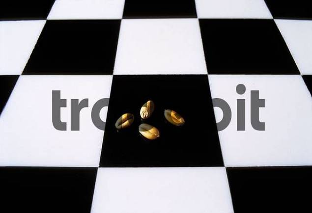 Chess Board Checkerboard Cequerboard With Four Grains Of