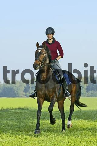 Young lady rider galloping on back of her German horse