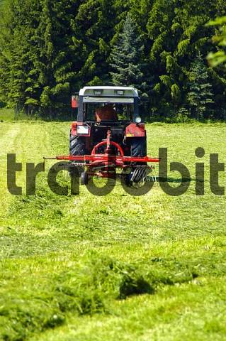 A Tractor turning the fresh mowed gras around