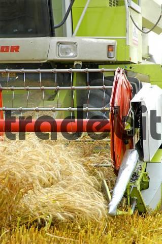 A combine Harvester harvesting crops