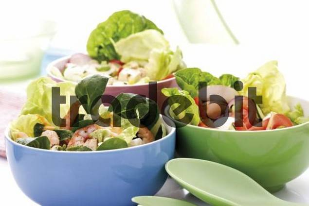 Various salads in bowls: romaine lettuce, cucumber, peppers, button mushrooms and mozzarella, shrimp, radish, lambs lettuce, feta cheese and dressing