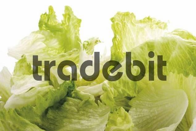 Iceberg lettuce, format-filling