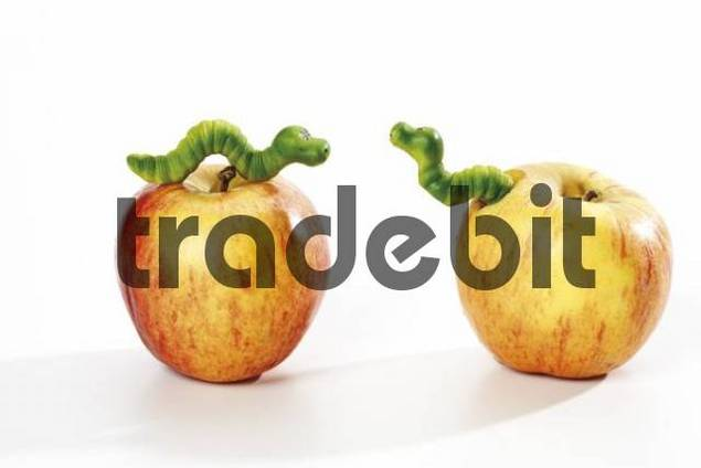 Apples and worms - Download Abstract