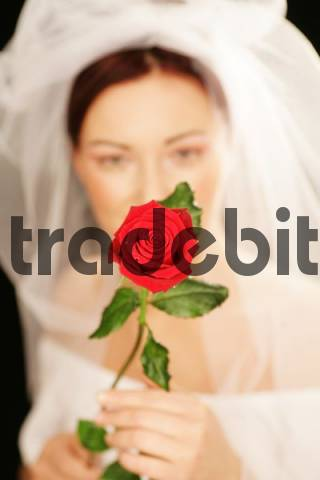 Bride holding red rose