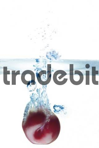Red plum dunked into water