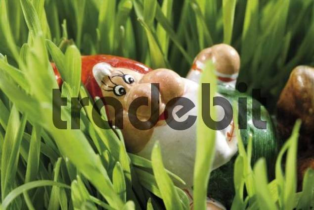 Garden gnome in the grass