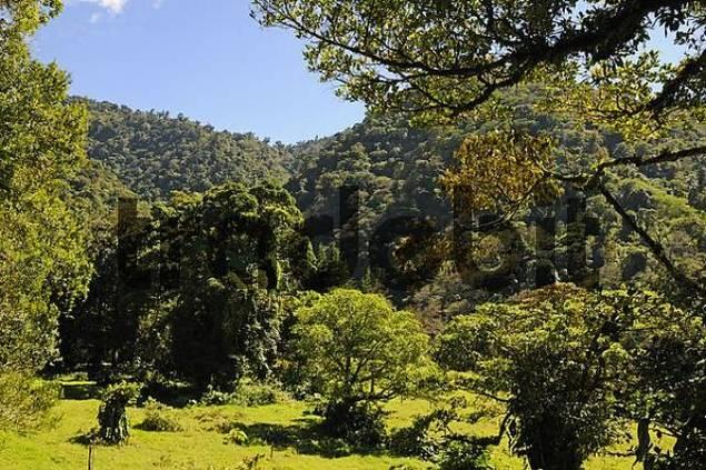 Juan Castro Blanco National Park, Costa Rica, Central America