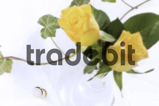 Wedding rings, floribunda roses and an ivy tendril