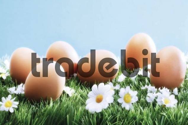 Brown eggs on a flower meadow
