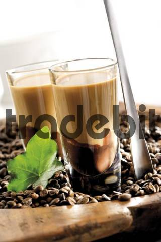Glass of Latte Macchiato liqueur layered on top of chocolate liqueur, sitting on a bed of coffee beans