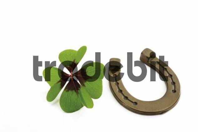 Horseshoe and a four-leaf clover