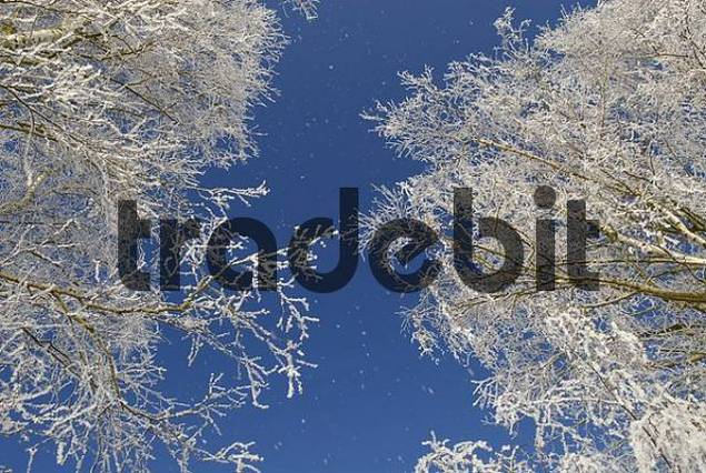 frosted ice trees in winter landscape