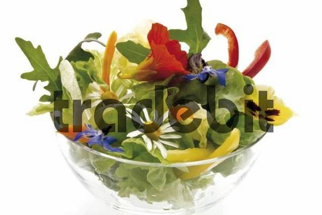 Healthy blossom salad in a glass bowl: lettuce, rockets, nasturtium, daisies, borage blossoms, pansies and capsicum slices