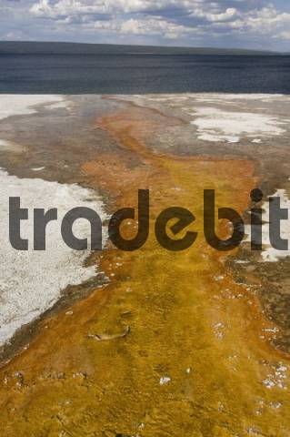Water from a hot spring streaming into Yellowstone Lake, West Thumb Geyser Basin, Yellowstone National Park, Wyoming, USA