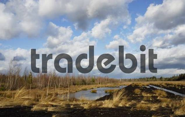 Flooded peat drain, Nicklheim, Bavaria, Germany, Europe