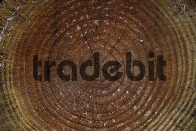 Tree rings annual rings, texture, Lueerwald Luer Forest, Sauerland, North Rhine-Westphalia, Germany
